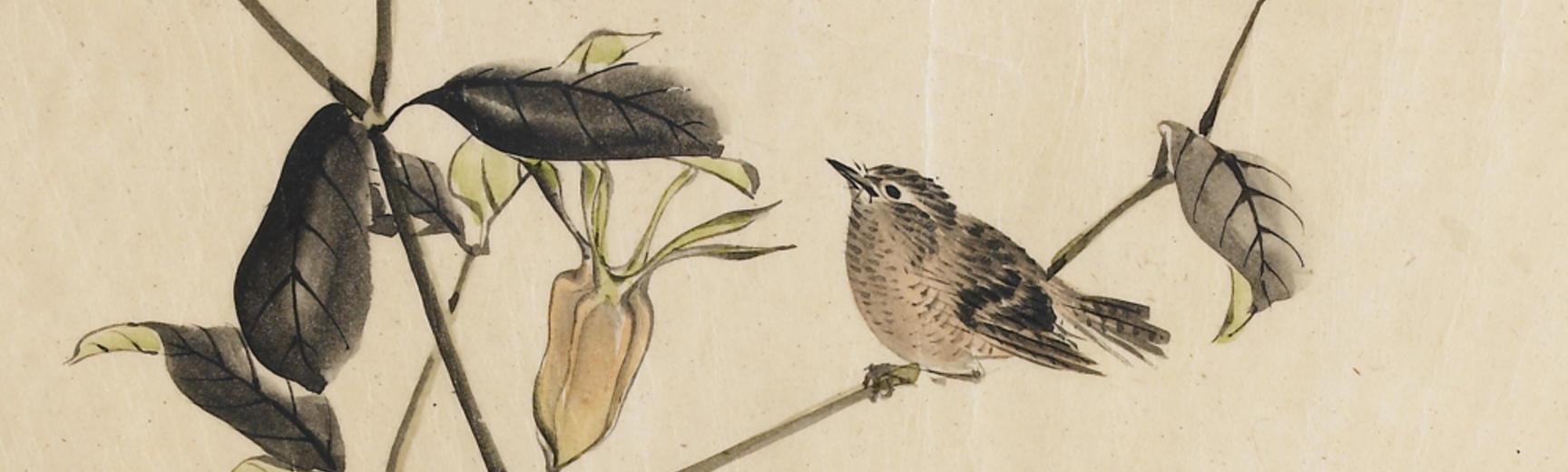Sparrow on an akebi plant, by Kunii Obun