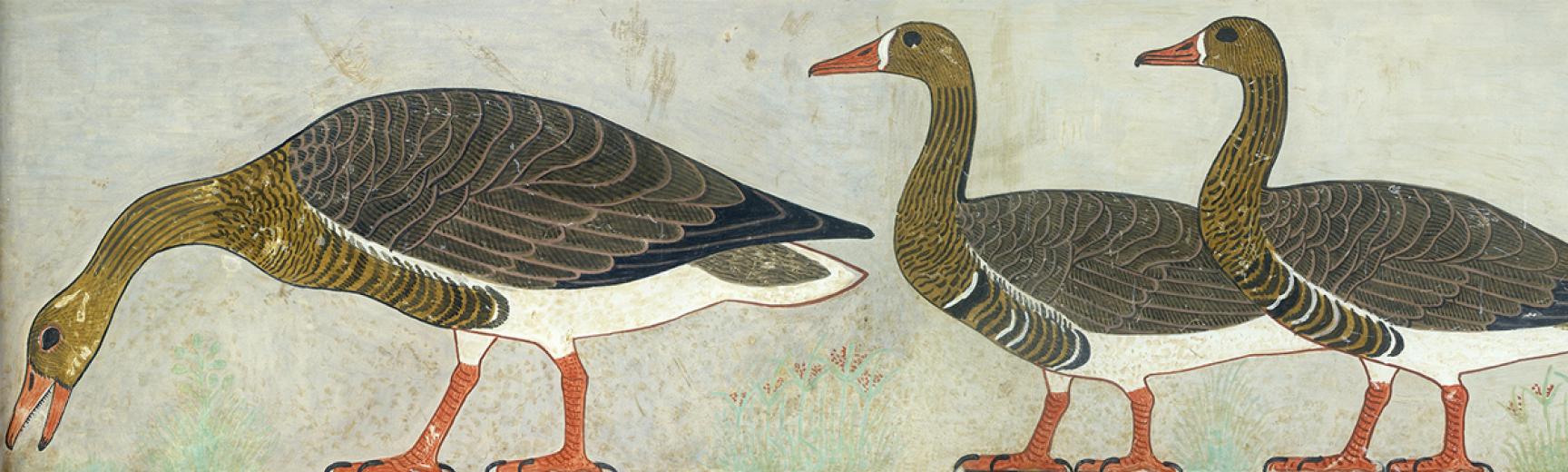six geese an 1947 35 detail
