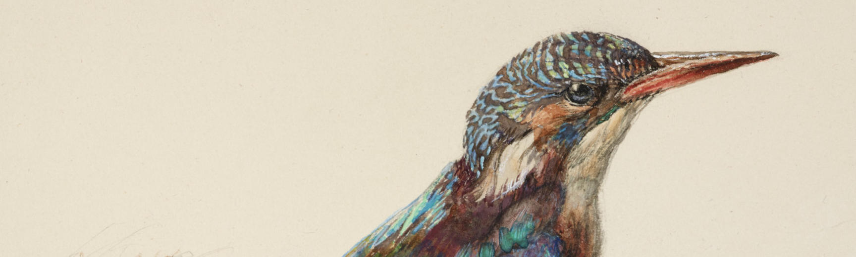 John Ruskin, Study of a Kingfisher with Dominant Reference to Colour