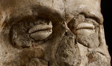 AN1955.565 Jericho Skull Around 7000BC