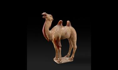 Camel, Tang Dynasty