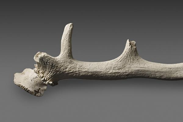 antler pick from stonehenge