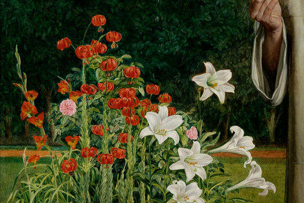 An image displaying white lilies and red poppies, and a hand holding a white petal flower