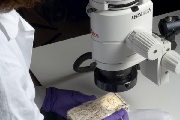 Using a microscope to examine fine detail