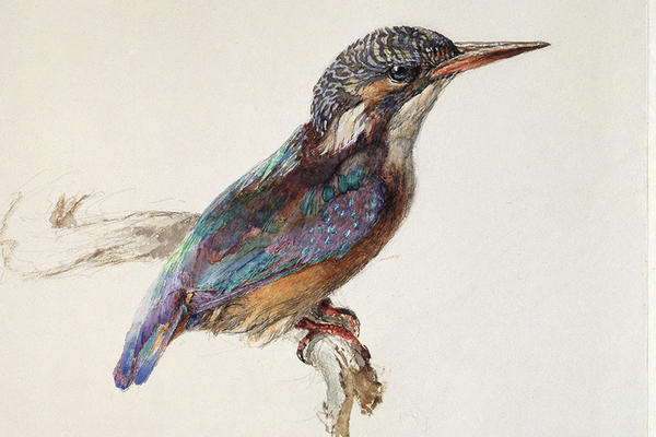A drawing of a bird with colourful wings.