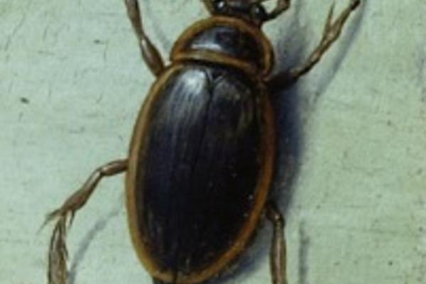 wa1940 2 40 beetle detail