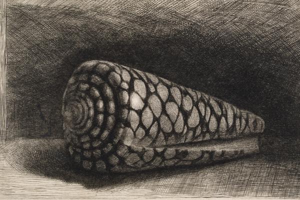 Rembrandt Exhibition Shell : Rembrandt etchings ashmolean museum