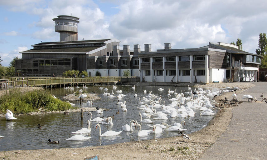 Photo of the Slimbridge in july
