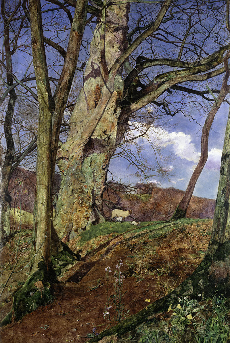 A richly coloured spring scene in a wooded area featuring foliage in the foreground, a sheep and two lambs in the mid ground and blue sky with clouds in the background.