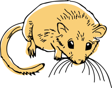 Drawing of a dormouse